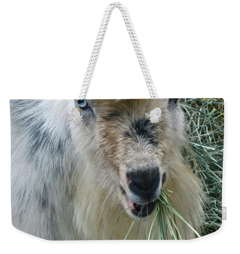 Goat Photograph Weekender Tote Bag featuring the photograph King Of The Road by Gwyn Newcombe