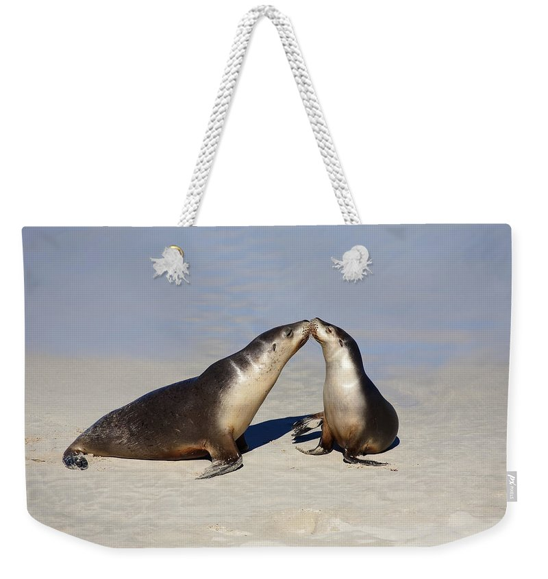 Sea Lion Weekender Tote Bag featuring the photograph Kiss by Mike Dawson