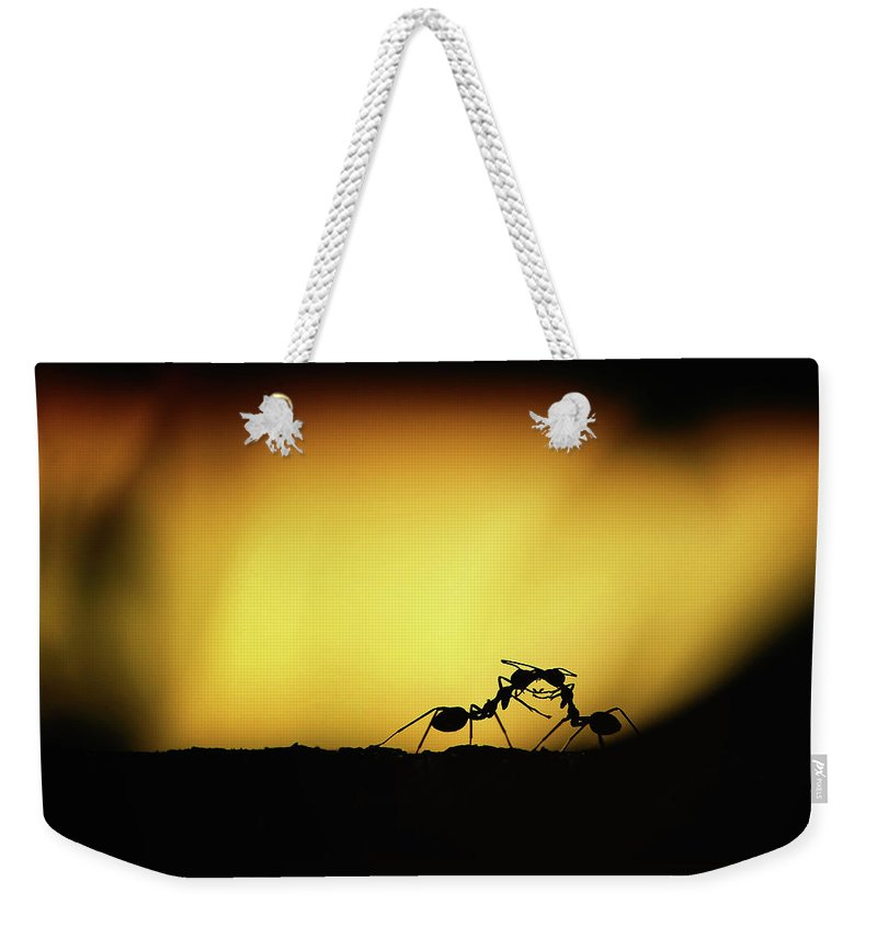 Animal Weekender Tote Bag featuring the photograph Kissing You by Jufri Mustafa