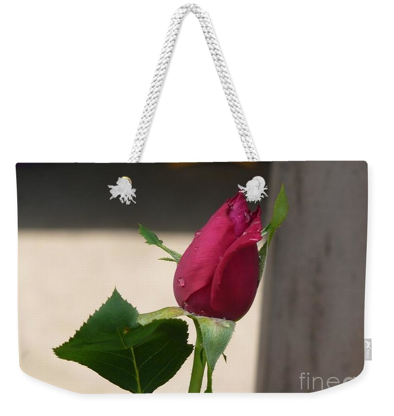 Rose Weekender Tote Bag featuring the photograph Kiti's Rose by Barb Montanye Meseroll