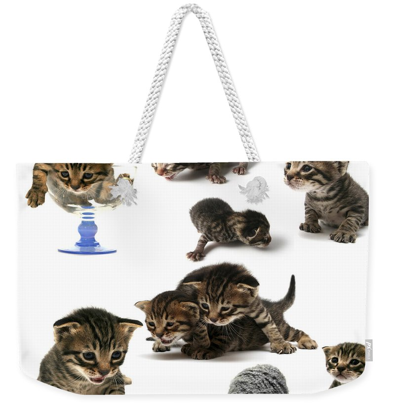 Cat Cats Weekender Tote Bag featuring the photograph Kitten Collage by Yedidya yos mizrachi