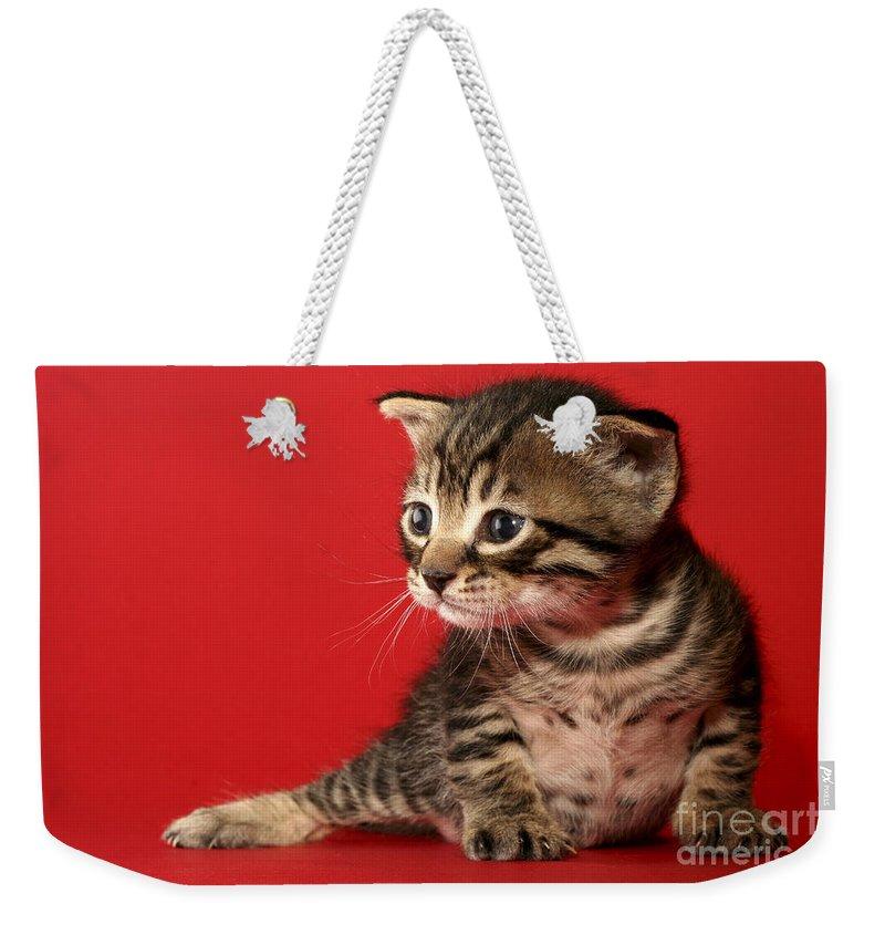 Cat Weekender Tote Bag featuring the photograph Kitten On Red by Yedidya yos mizrachi