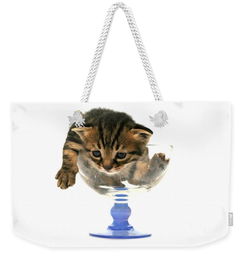 Cat Weekender Tote Bag featuring the photograph Kitten Sits In A Glass by Yedidya yos mizrachi