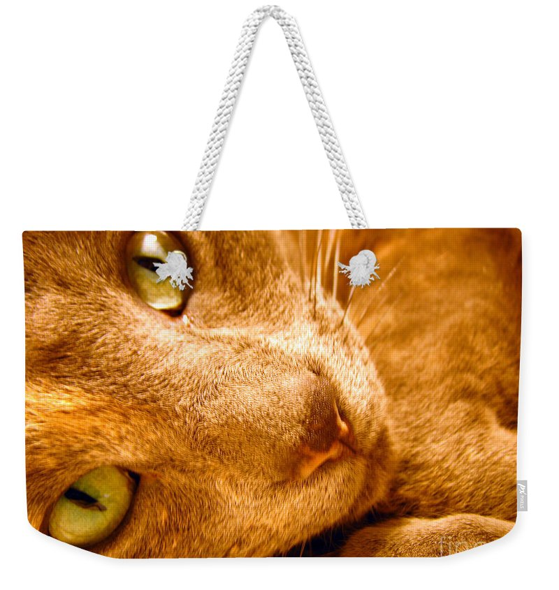 Cats Weekender Tote Bag featuring the photograph Kitty by Amanda Barcon
