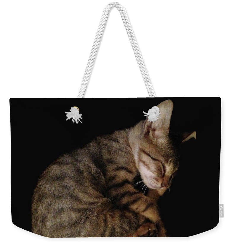 Cat Weekender Tote Bag featuring the photograph Kitty Cat Curls Up by Flycatch Studio