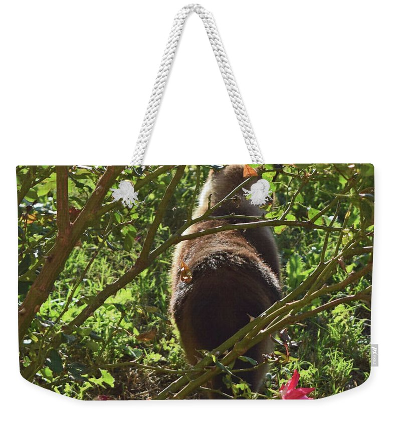 Cats Weekender Tote Bag featuring the photograph Kitty In The Roses by Brandy Stinchcomb