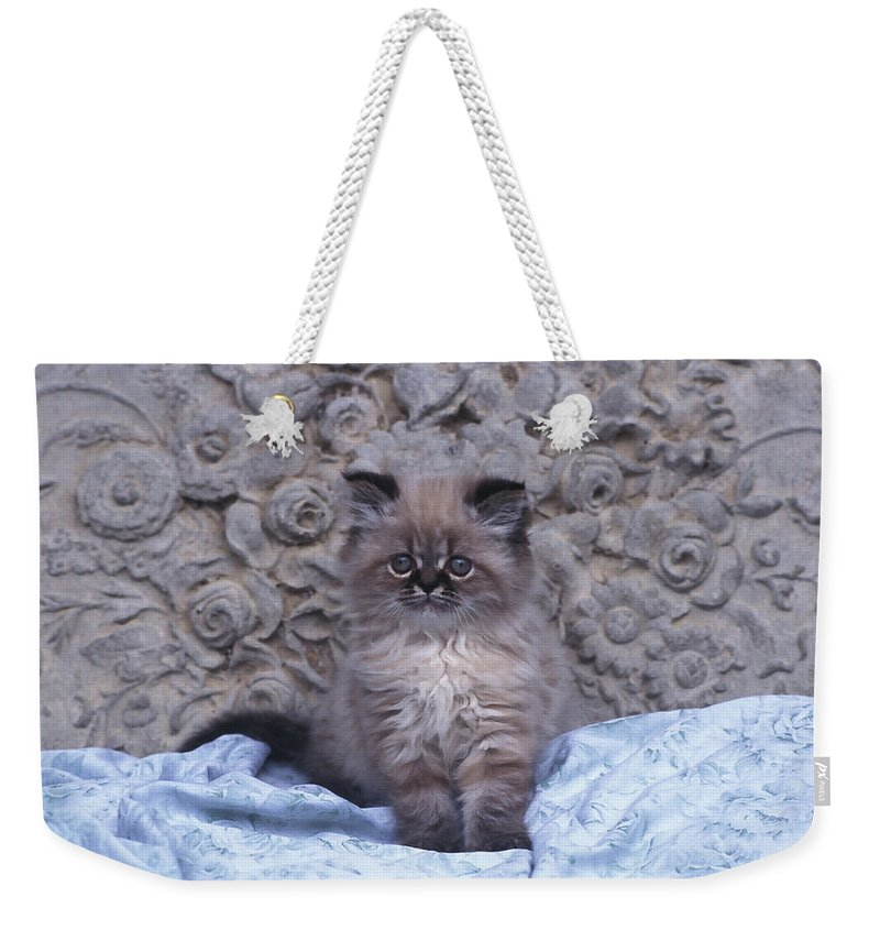 Tree Weekender Tote Bag featuring the photograph Kitty by Joe Palermo