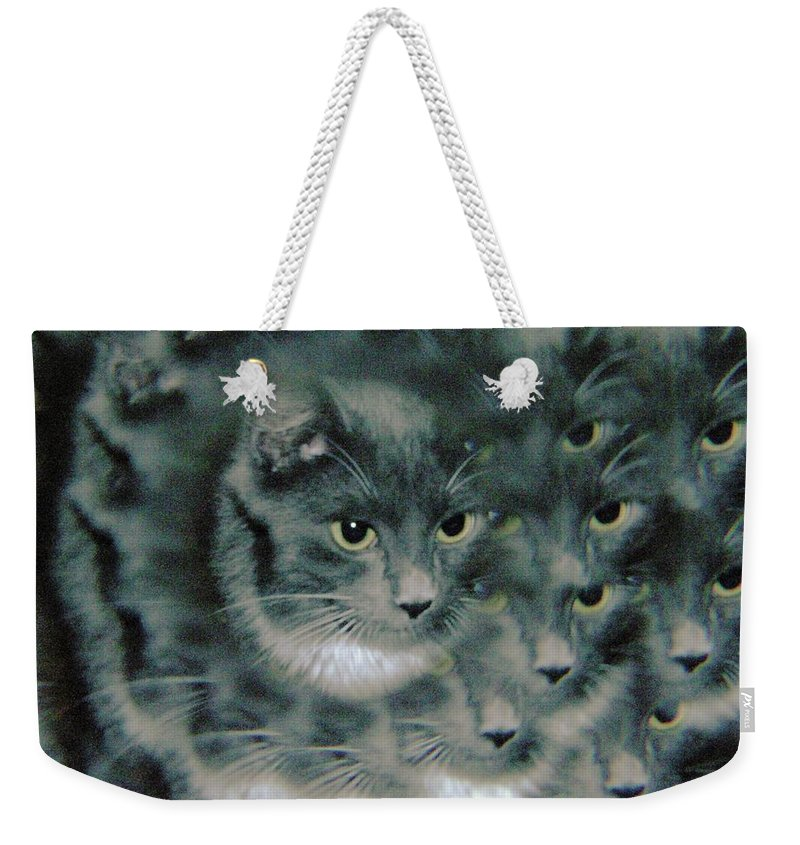 Cats Weekender Tote Bag featuring the photograph Kitty Portrait by Jeff Swan