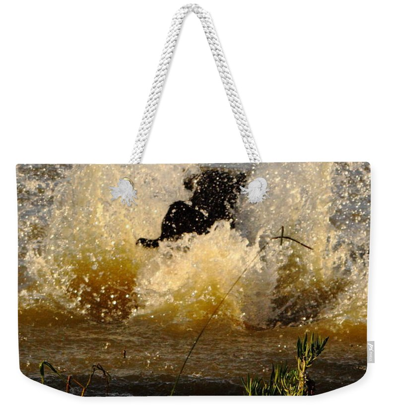 Animal Weekender Tote Bag featuring the photograph Lab At Work by Robert Frederick