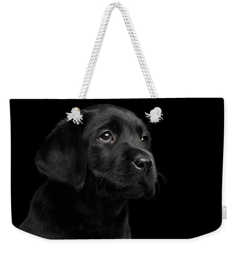 Labrador Retriever Weekender Tote Bags