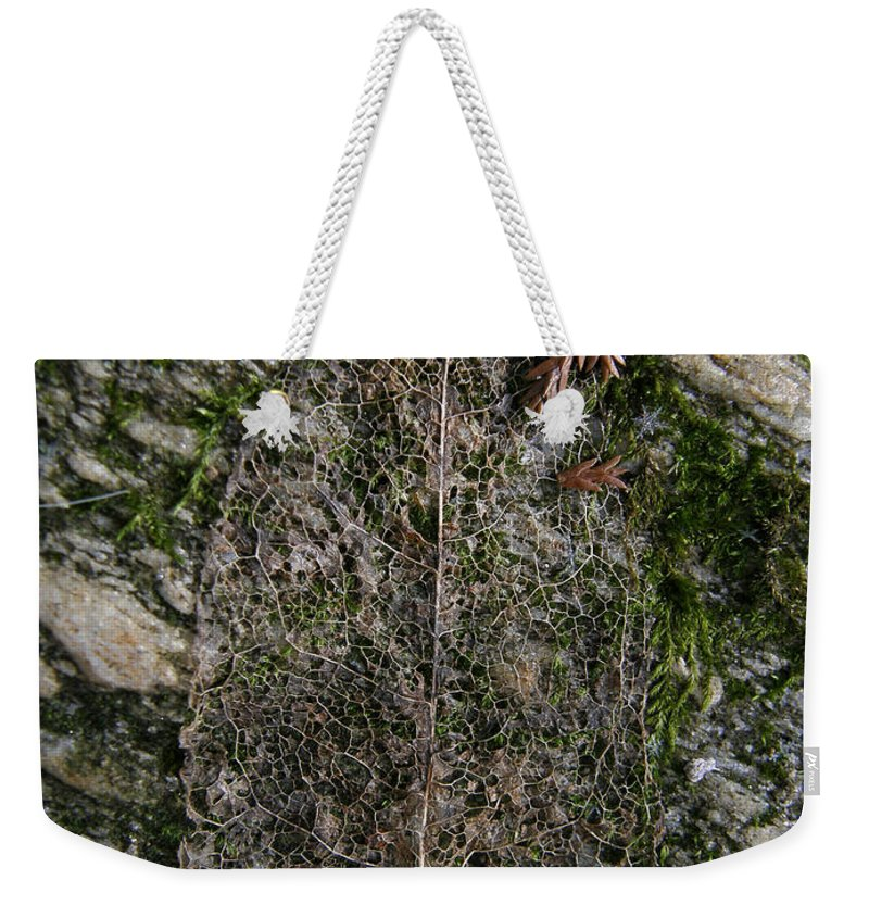 Leaf Weekender Tote Bag featuring the photograph Lacey Leaf by Kimberly Mohlenhoff