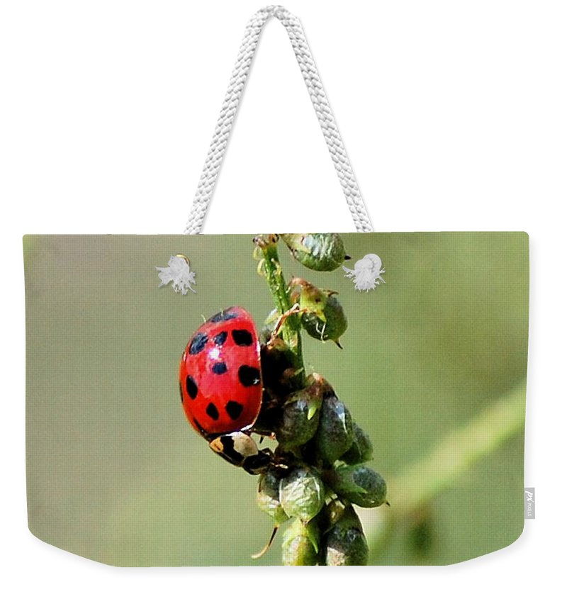 Landscape Weekender Tote Bag featuring the photograph Lady Beetle by David Lane