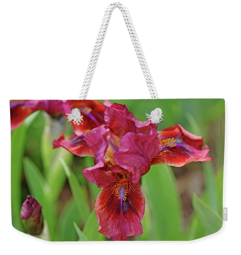 Iris Weekender Tote Bag featuring the photograph Lady In Red Iris by Debbie Oppermann