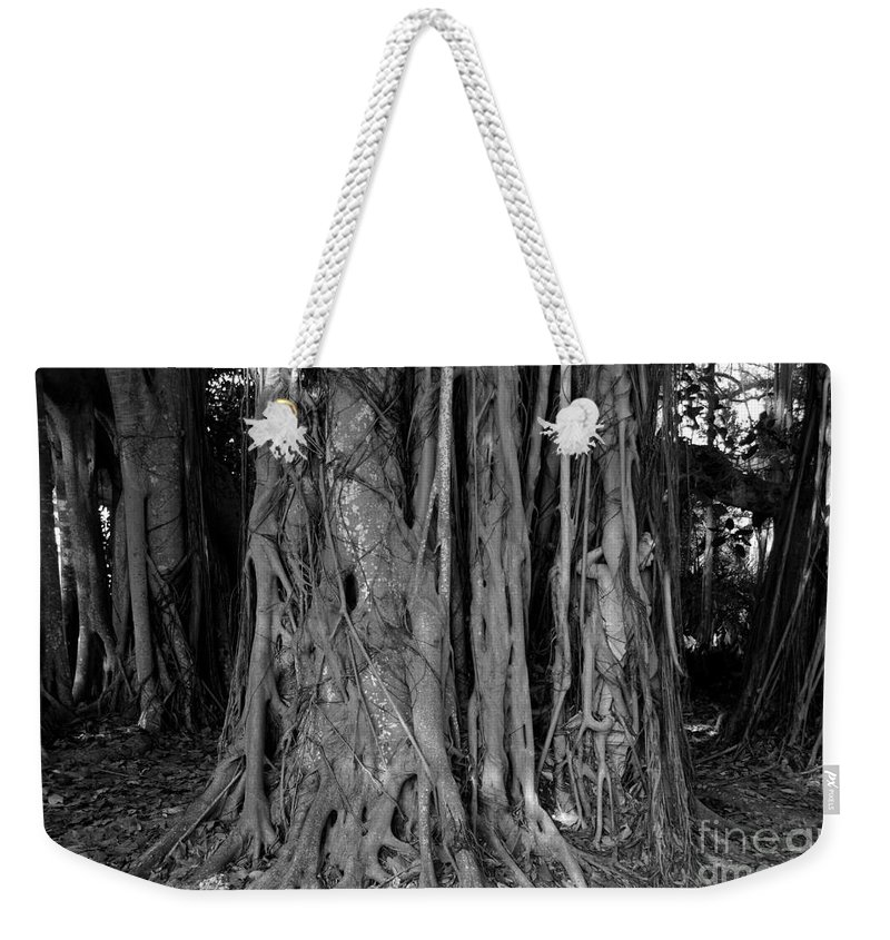 Banyan Trees Weekender Tote Bag featuring the photograph Lady In The Banyans by David Lee Thompson