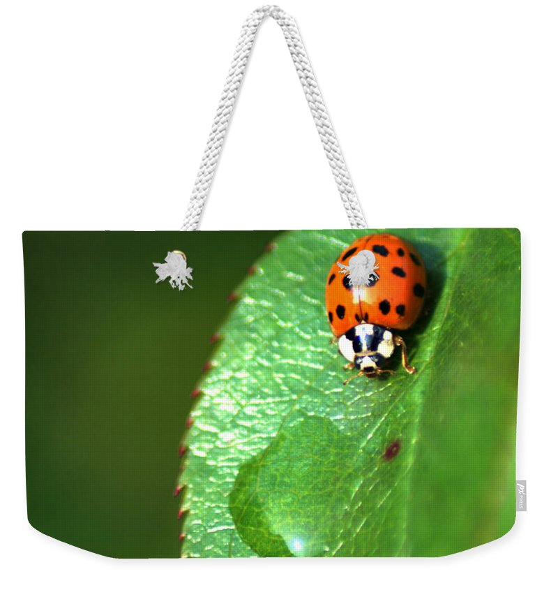 Ladybird Weekender Tote Bag featuring the photograph Ladybird by Chris Day