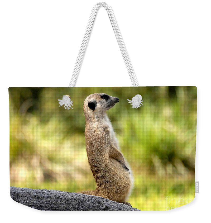 Laid Back Weekender Tote Bag featuring the photograph Laid Back by David Lee Thompson