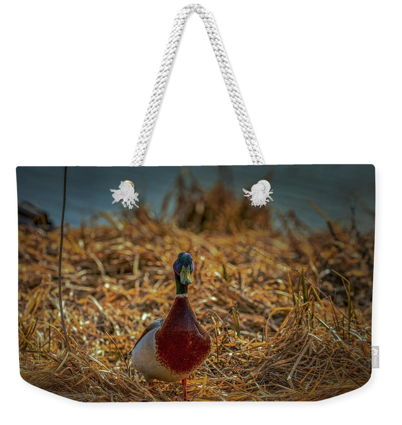 Duck.ducks Weekender Tote Bag featuring the photograph Landed Duck #g2 by Leif Sohlman