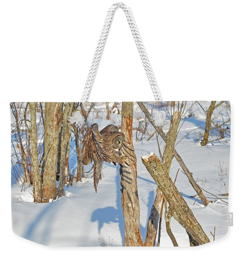 Great Gray Owl Weekender Tote Bag featuring the photograph Landing Claws by Asbed Iskedjian