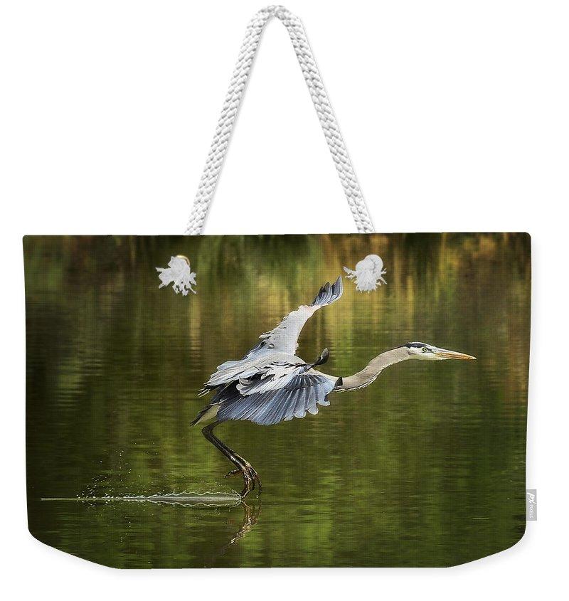 Great Blue Heron Weekender Tote Bag featuring the photograph Landing Gear Down by Saija Lehtonen