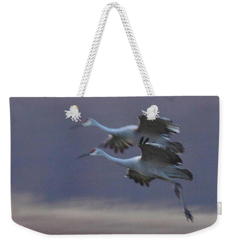 Sandhill Cranes Birds Photography Photograph Wildlife Flying Flight Weekender Tote Bag featuring the photograph Landing Gear Down by Shari Jardina