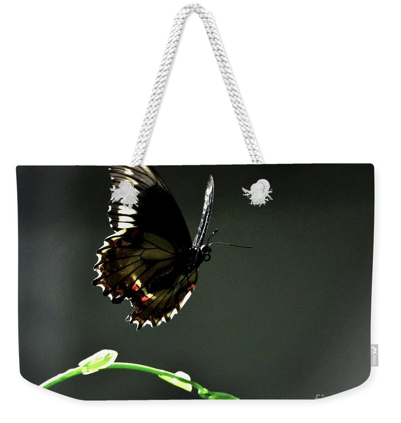 Swallowtail Weekender Tote Bag featuring the photograph Landing Spot 2 by Lisa Renee Ludlum
