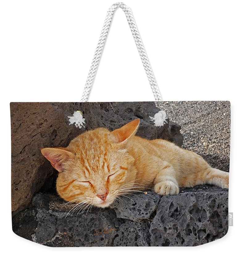 Cat Weekender Tote Bag featuring the photograph Lanzarote Ginger by Charles Stuart