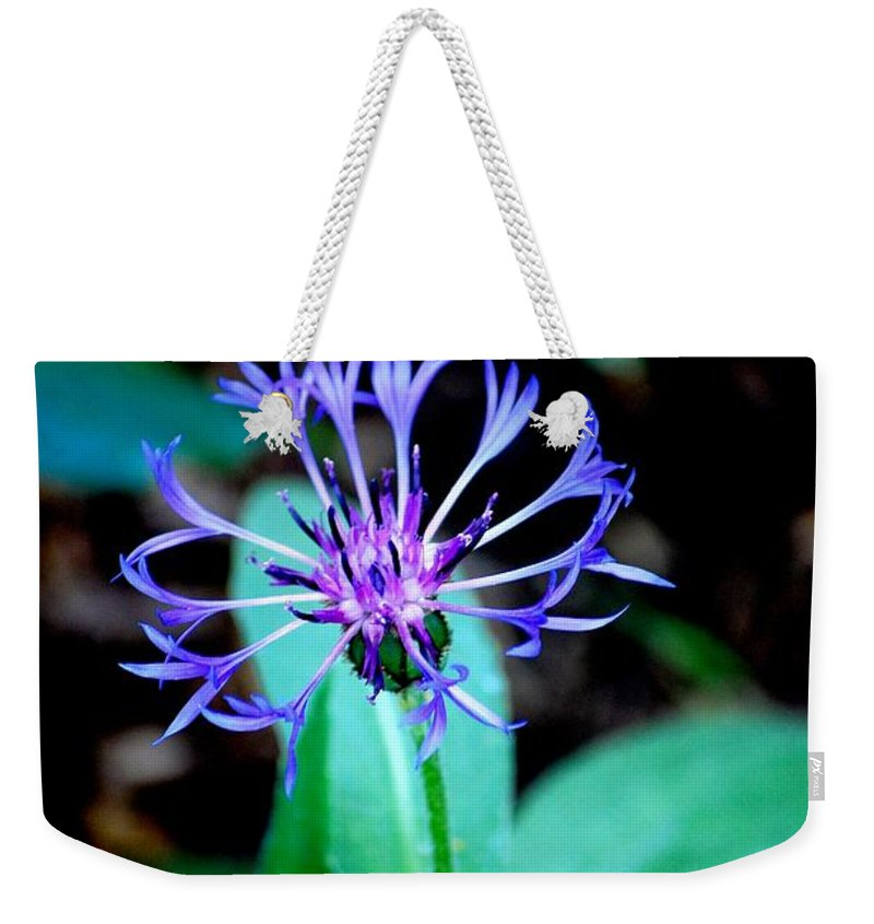 Digital Photograph Weekender Tote Bag featuring the photograph Last Flower In The Garden by David Lane