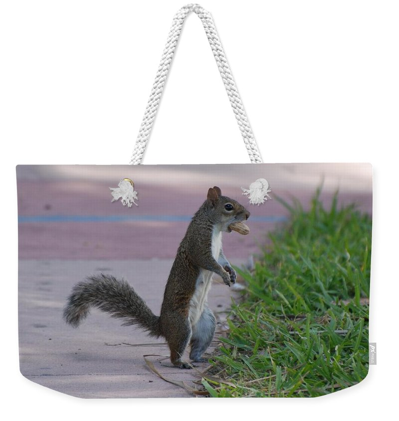 Squirrels Weekender Tote Bag featuring the photograph Last Squirrel Standing by Rob Hans