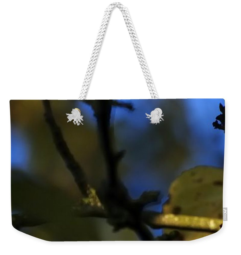Willamette Weekender Tote Bag featuring the photograph Late Fall Color 6493 by Jerry Sodorff