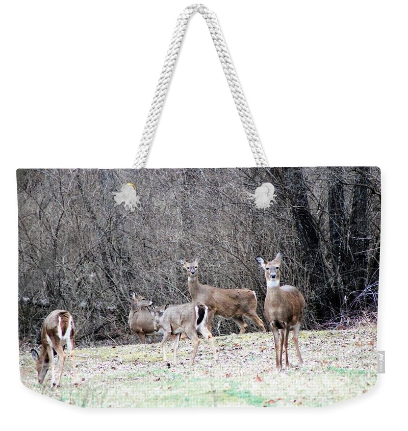 Whitetail Deer Weekender Tote Bag featuring the photograph Late Winter Whitetails by Lew Wescott