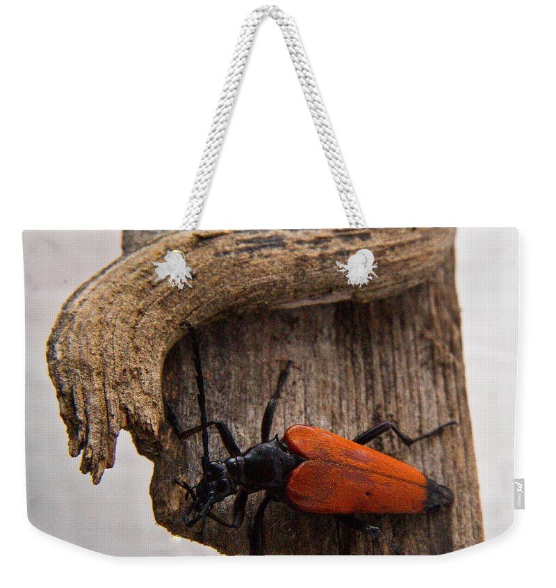 Laughing Weekender Tote Bag featuring the photograph Laughing Beetle by Douglas Barnett