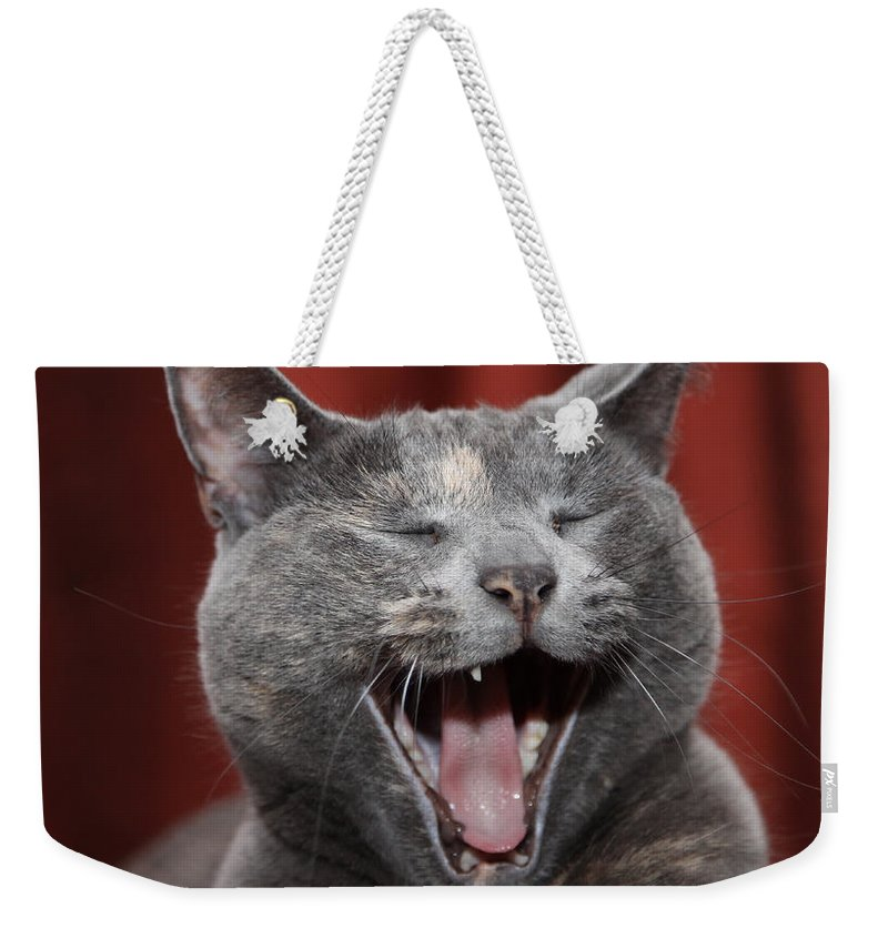 Kitty Weekender Tote Bag featuring the photograph Laughing Kitty by Amanda Barcon