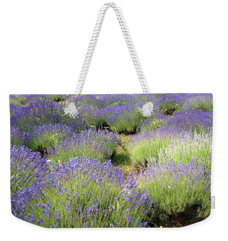 Lavender Weekender Tote Bag featuring the photograph Lavender Field, Tihany, Hungary by Attila Jandi