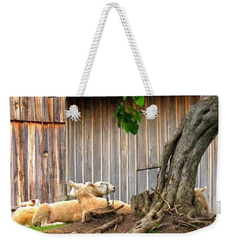 Sheep Weekender Tote Bag featuring the photograph Lawnmowers At Rest by Ian MacDonald