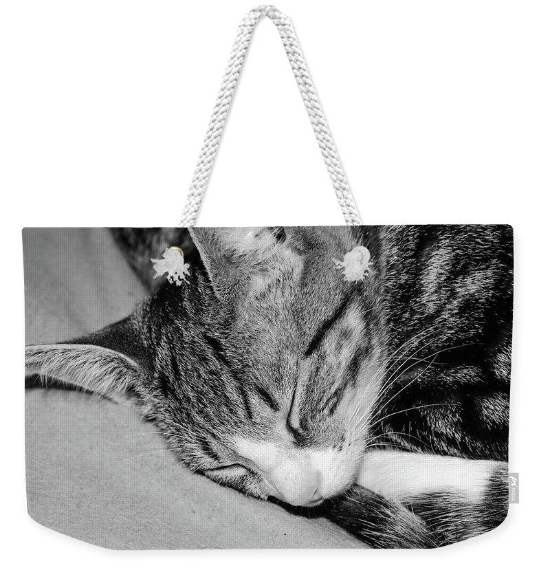 Animal Weekender Tote Bag featuring the photograph Lea Sleepy Cat by Nenad Isakovic