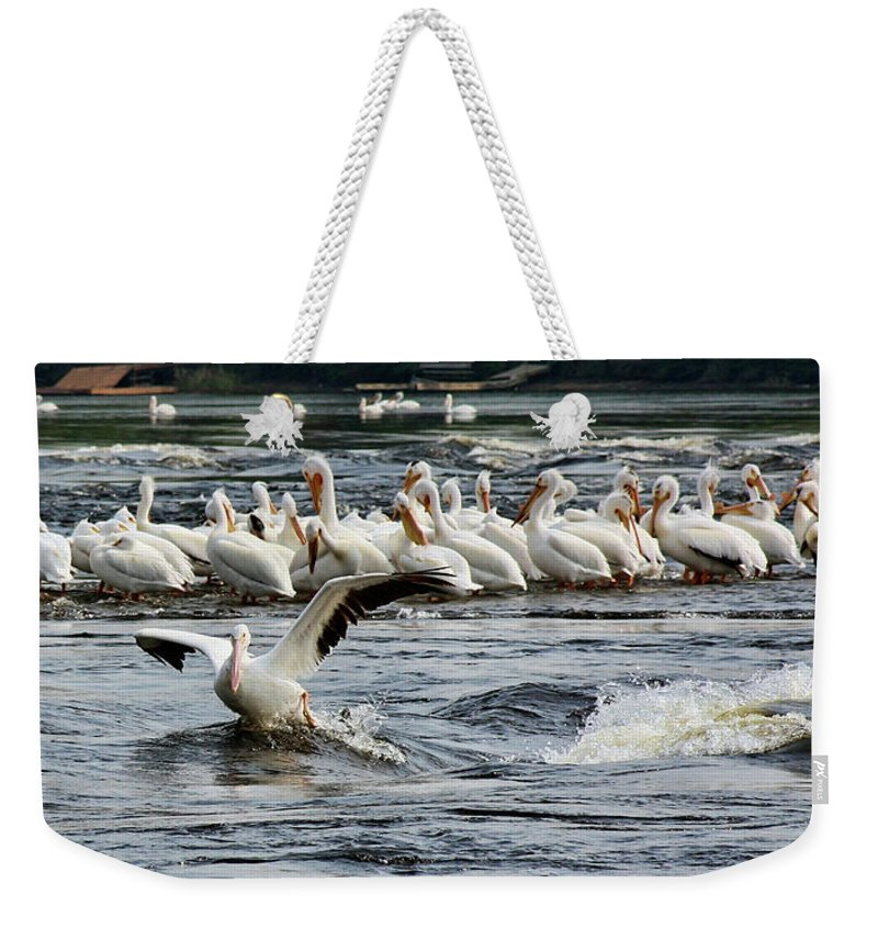 Pelicans Weekender Tote Bag featuring the photograph Leading Pelican by Tatiana Travelways