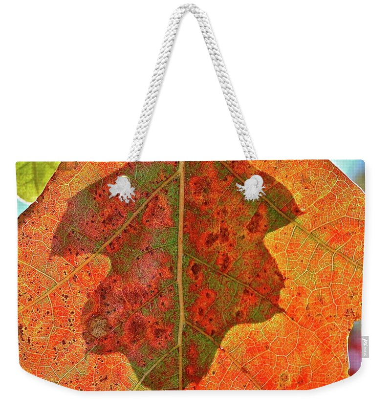 Nature Weekender Tote Bag featuring the photograph Leaf Behind by Diana Hatcher