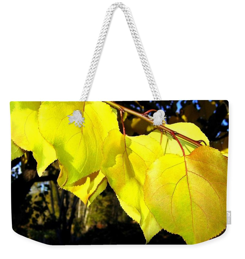 Apricot Leaves Weekender Tote Bag featuring the photograph Leaf Line by Will Borden