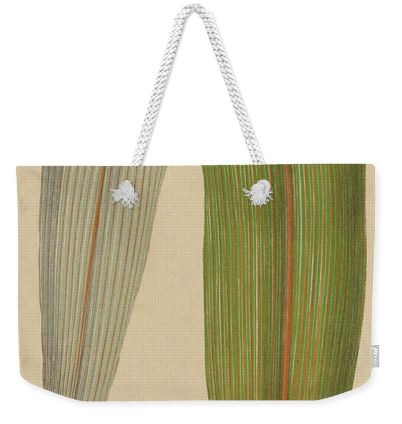 Leaf Weekender Tote Bag featuring the painting Leaf Of A Mountain Cabbage Tree Or Bush Flax by English School