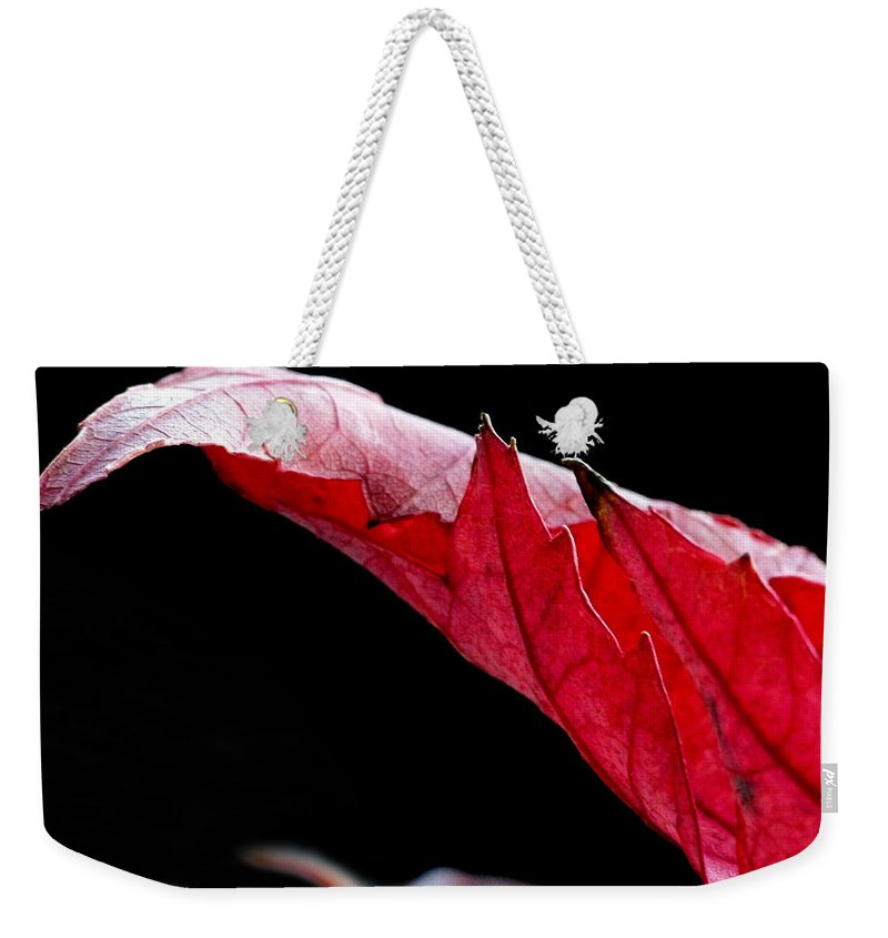 Macro Weekender Tote Bag featuring the photograph Leaf Study IIi by Lauren Radke