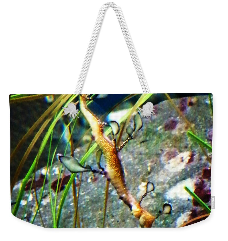 Paintings Weekender Tote Bag featuring the photograph Leafy Sea Dragon by Anthony Jones
