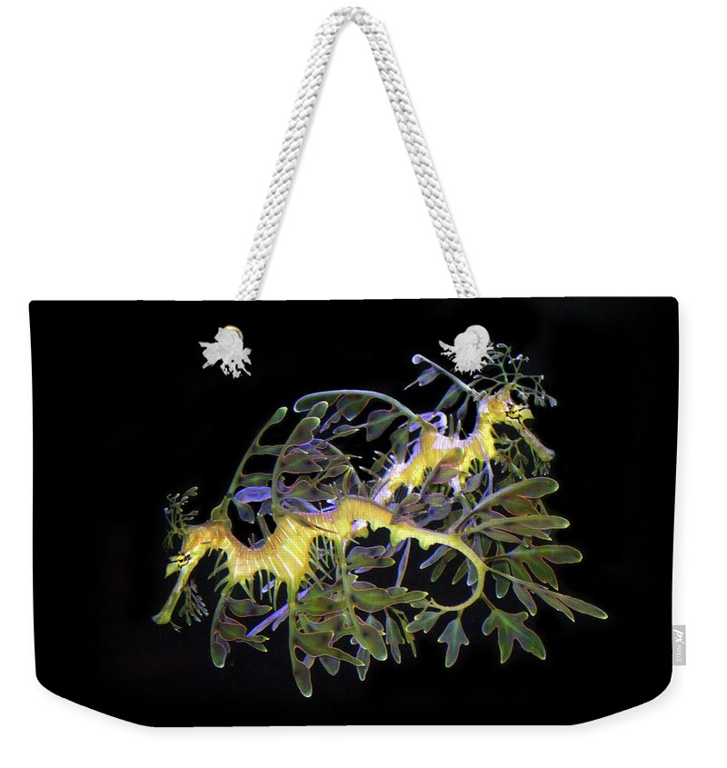 Sea Dragons Weekender Tote Bag featuring the photograph Leafy Sea Dragons by Anthony Jones