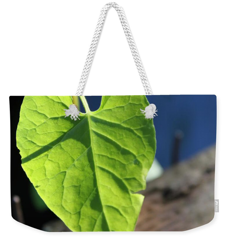Leaf Weekender Tote Bag featuring the photograph Leafy Veins by Lauri Novak