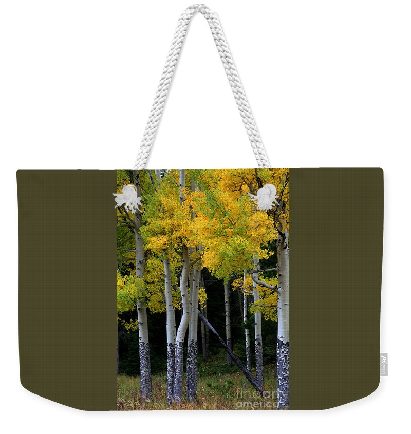 Aspens Weekender Tote Bag featuring the photograph Leaning Aspen by Timothy Johnson