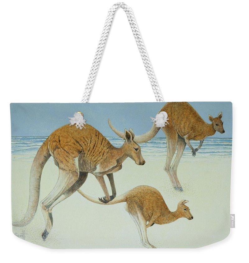 Kangaroo Weekender Tote Bags