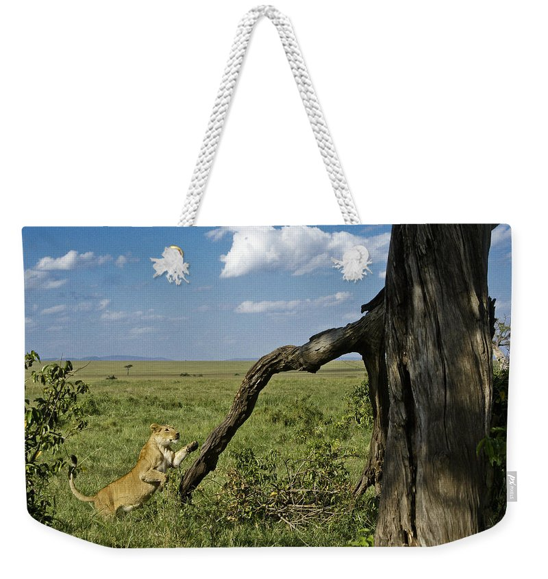 Africa Weekender Tote Bag featuring the photograph Leaping Lion by Michele Burgess