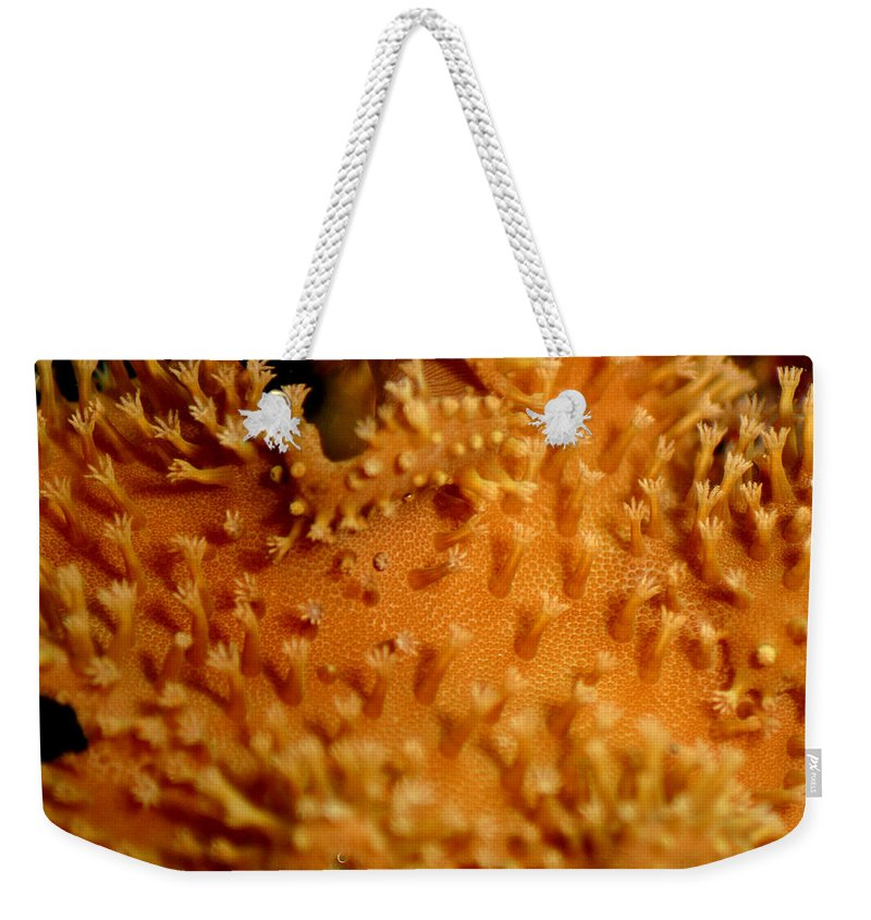 Underwater Weekender Tote Bag featuring the photograph Leather Coral by Anthony Jones