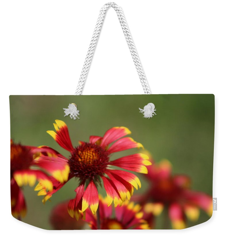Coneflower Weekender Tote Bag featuring the photograph Lemon Yellow and Candy Apple Red Coneflower by Colleen Cornelius