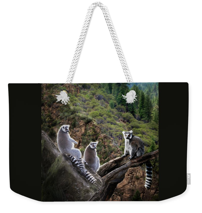 Nature Photography Weekender Tote Bag featuring the photograph Lemur Family by Melinda Hughes-Berland