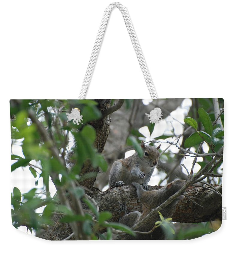 Squirrel Weekender Tote Bag featuring the photograph Lending A Helping Hand by Rob Hans